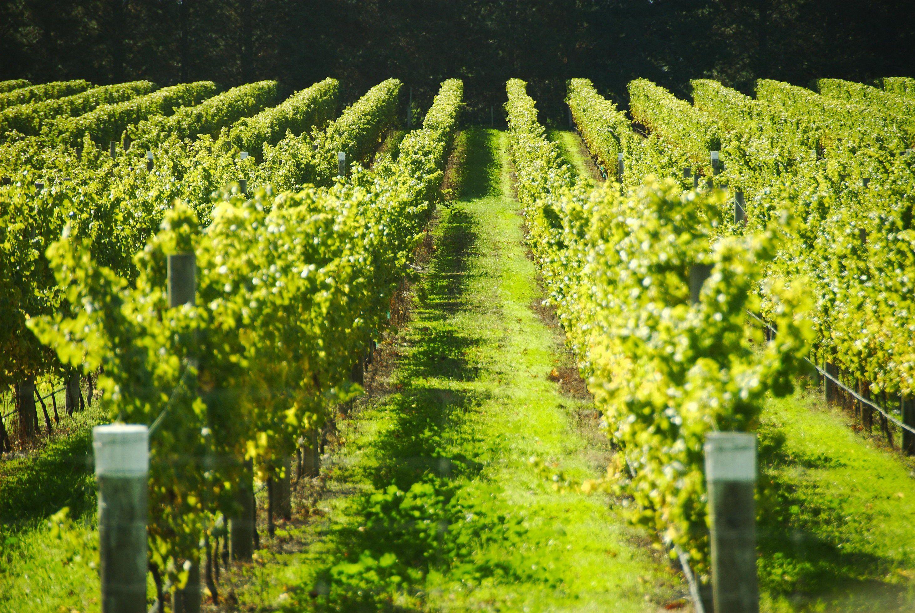 9531_vineyard-fields-france.jpg