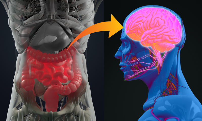 How and why the brain and the gut talk to each other